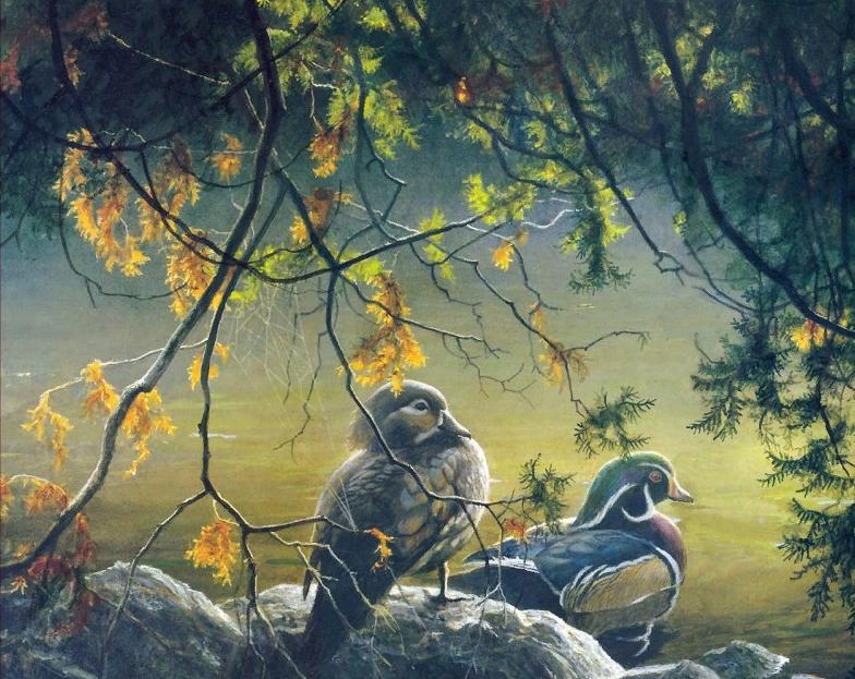 Лесные Утки | Роберт Бейтман